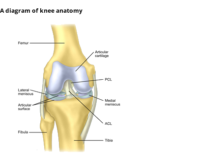 Anterior Cruciate Ligament Acl Surgeons Consultants Yorkshire