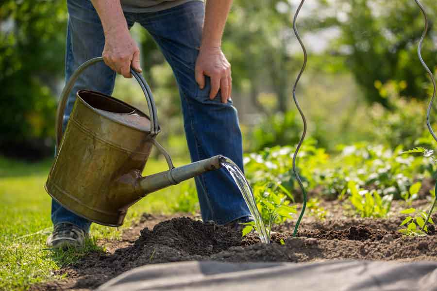 Gardening after successful knee surgery