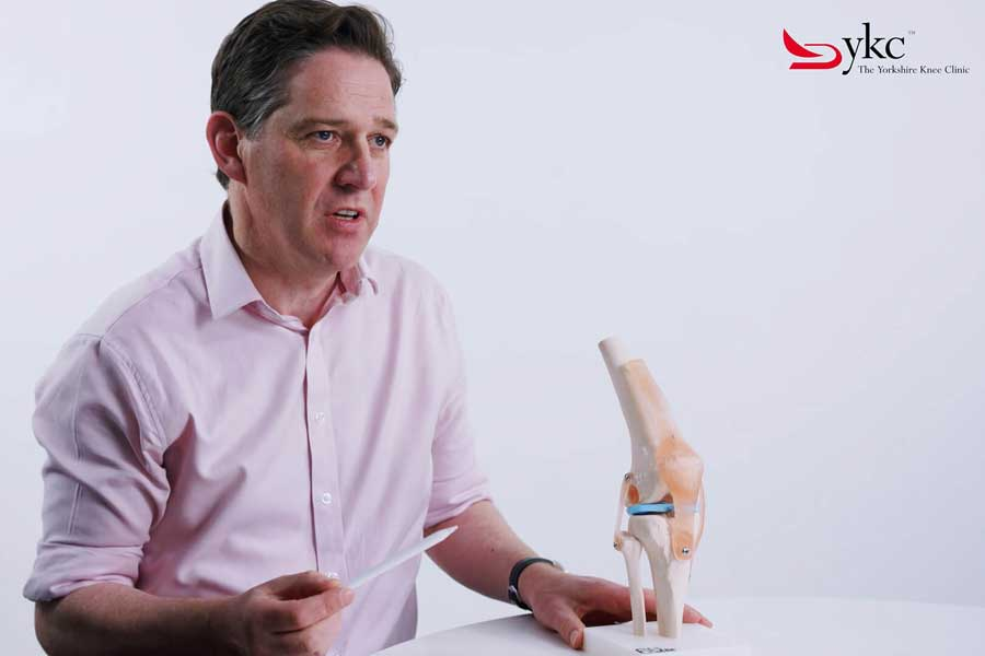 YKC Video The Basic Anatomy of The Knee